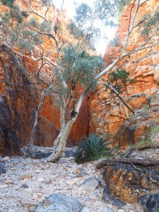 Late afternoon view at Standley Chasm in the McDonnell Ranges, Alice Springs, Australia
