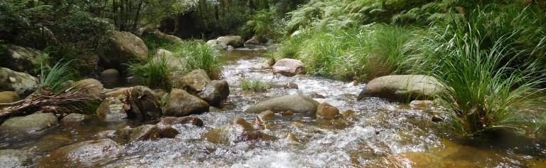 Cronan Creek