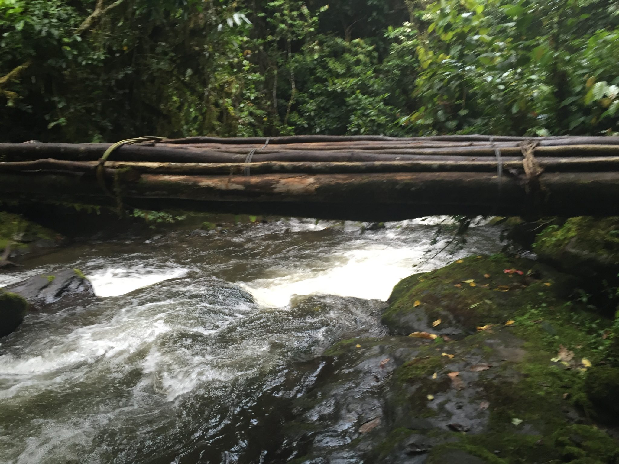 Makeshift bridges everywhere on the Kokoda Track with Women's Fitness Adventures