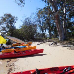 Morwong Beach Kayaking Adventure